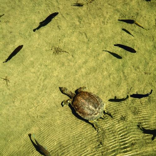 especies-endémicas-tortuga-y-mojarras-cuatro-cienegas