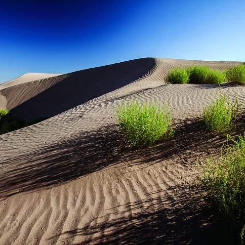 viesca dunas de bilbao