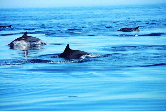 Isla Coronados 0025